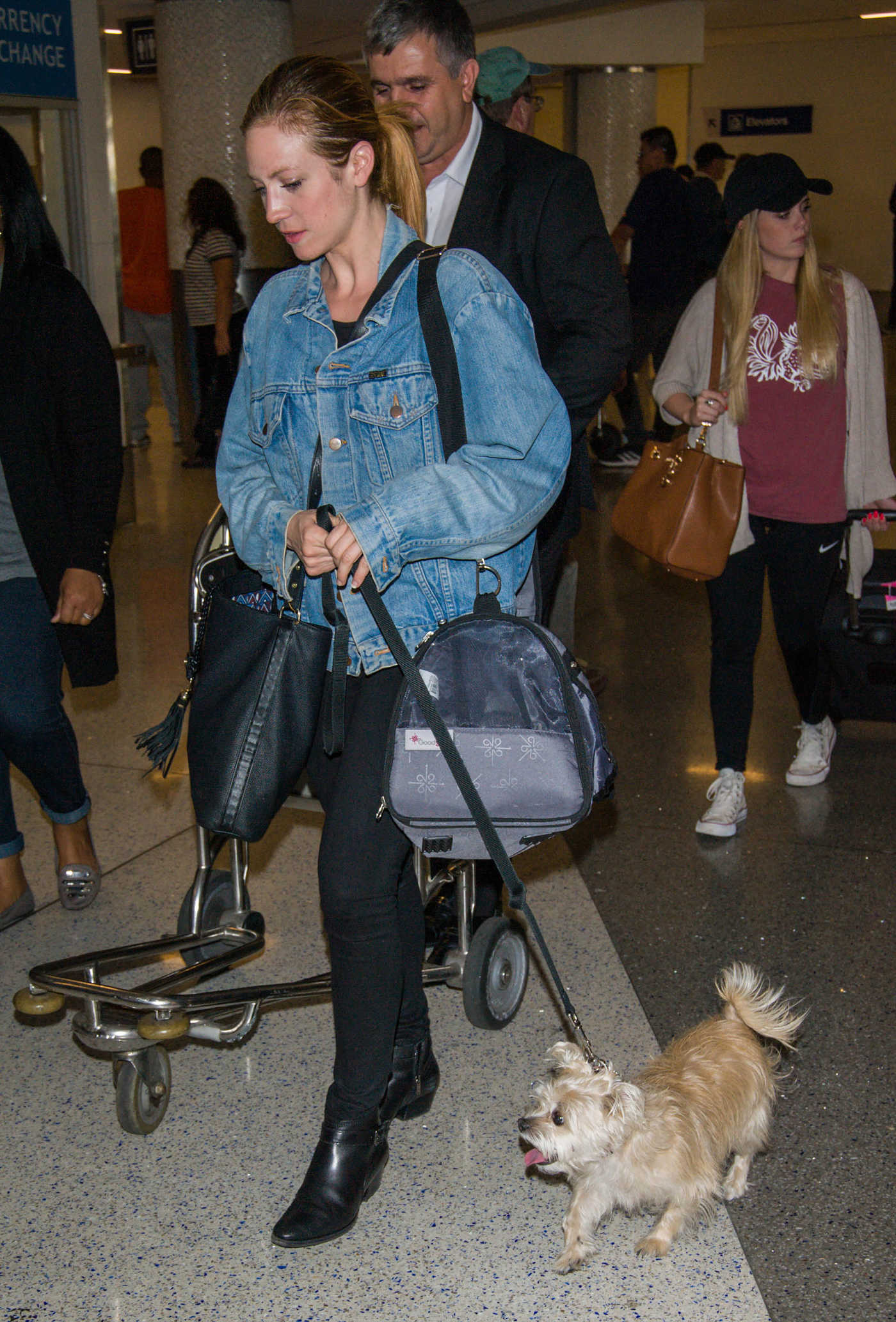 Brittany Snow Was Seen With Her Dog at LAX Airport in Los Angeles 04/07/2017