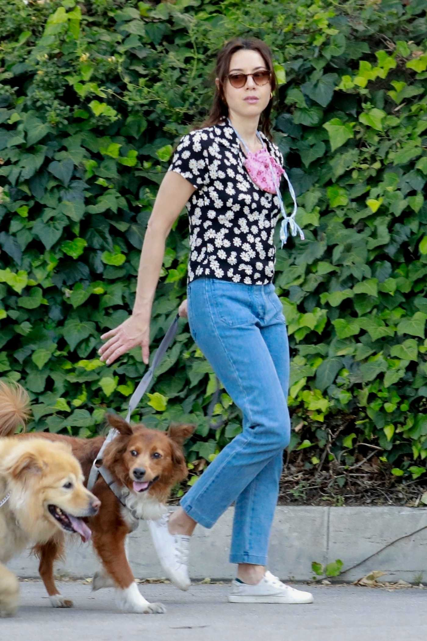 Aubrey Plaza in a White Sneakers Walks Her Dogs Out with Jeff Baena in Los Feliz 05/05/2020